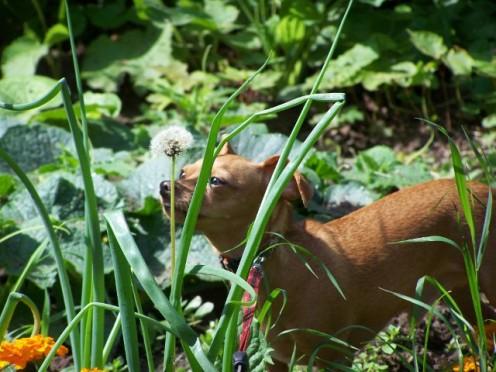 Smelling the vegetables