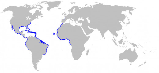 The blue areas represent where Nurse Sharks can be found in the world.
