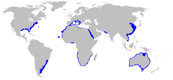 The blue areas represents places where Sand Tiger sharks can be found.