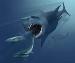 Megalodon - The Megalodon Shark