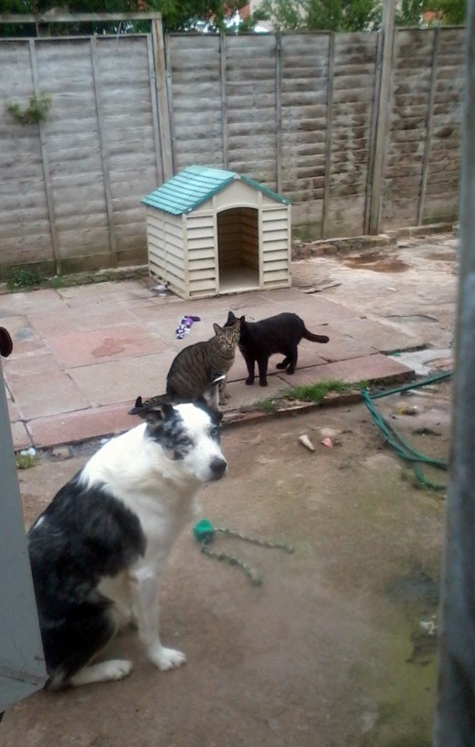 Blue with my cats Harley and Pepper in the back garden