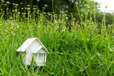 Slight Overgrowth in the Garden