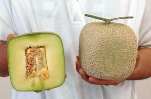 http://commons.wikimedia.org/wiki/File:Squeredmelon_inside001.jpg