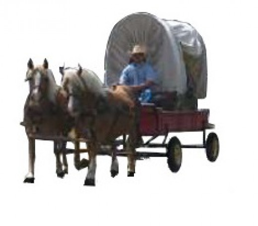 Haflingers puling a cart.