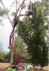 GreenWorks Tree Care on the Spider Lift