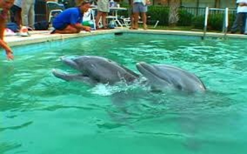 Watch Dolphins swim, pet them, play with them and feed them.