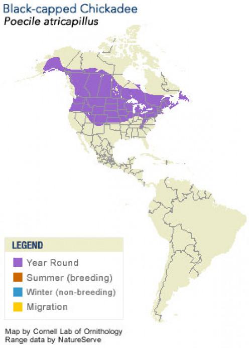 Black-capped Chickadee range map