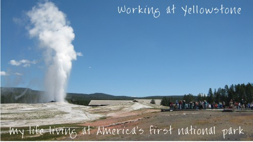 Old Faithful on a clear sunny day.