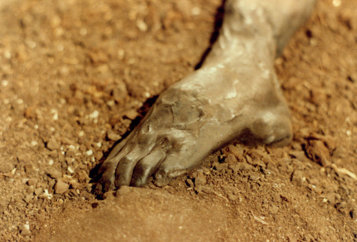 The foot of a Danish bog body known as Grauballe Man, which was discovered in 1952.
