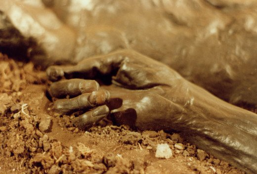 Hand of the Danish bog body known as Grauballe Man, discovered in 1952.