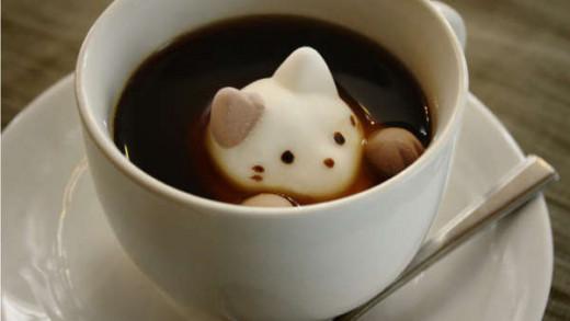 Cat Coffee!