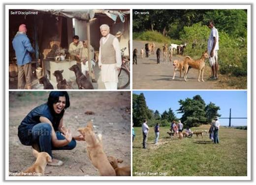 indianpariahdog.blogspot.com