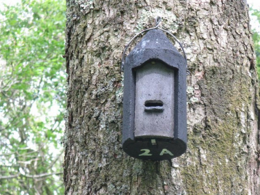 This nest box (actually a bat box) is made out of woodcrete (a mixture of sawdust and concrete) its strong enough to repel attack from woodpeckers and rodents such as squirrels, who also predate young birds/bats from time to time.