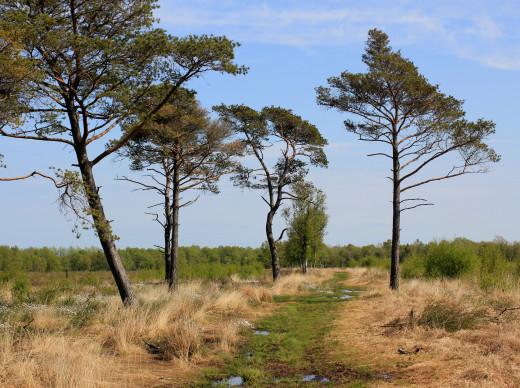 Svanemosen, a raised, 110 acre bog, is located six kilometers southwest of Kolding,Denmark.