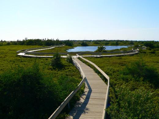 Boardwalk on peat-moss bog, Miscou Island, NB, Canada.