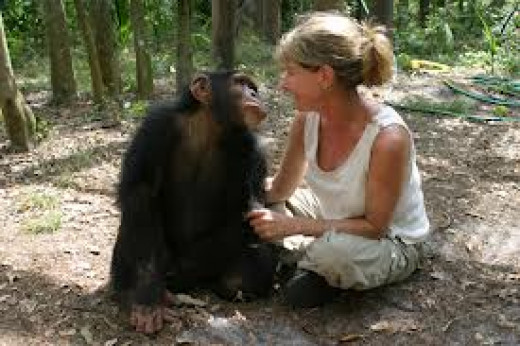 Director Allison Argo on location filming Chimpanzees, An Unatural History