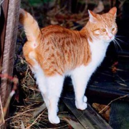 Feral cat marking its territory.
