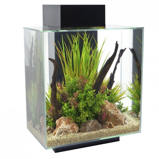 The Fluval Edge 12 Aquarium makes a great home for a Betta fish!