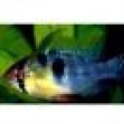 blueram85 profile image