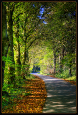 A Journey Toward Home