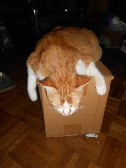 Setzer hanging all out over a box that had a bread maker in it. She could really relax..