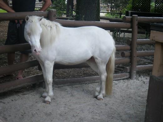 One of Cinderella's ponies
