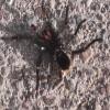 ptosis profile image
