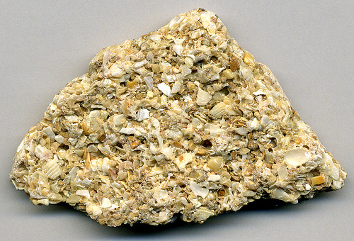 Coquina, a variety of Florida limestone, is composed of seashells.