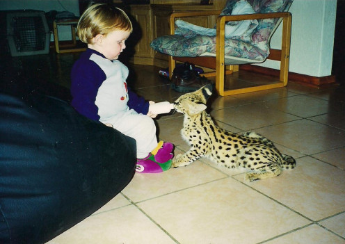 Cameron, my son, used to help quite a bit with the animals. He never complained though and here you can see him with Naughty, our little Serval.