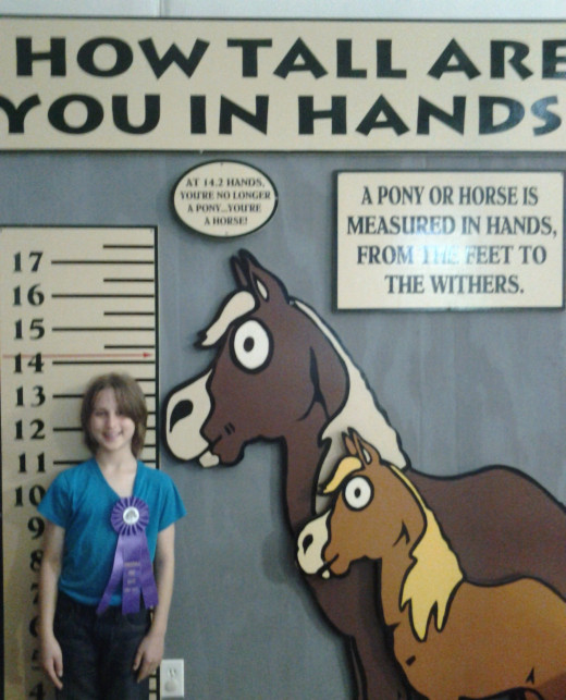 "Measured in ""Hands,"" she falls between a pony and a horse."