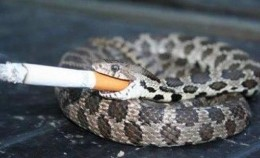 Taken in Delhi,India.There we met world famous snake Mr Smoking Joe.He taught AEvans and I how to blow smoke rings.