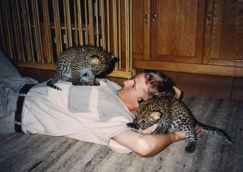 Working hard after hours....well, not really! Having a bit of down time with two leopard cubs.