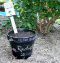 Chalkboard Paint Pots for Growing Veg from Seed