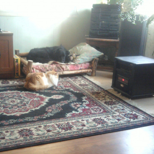 Pets enjoying the warmth of a heater.