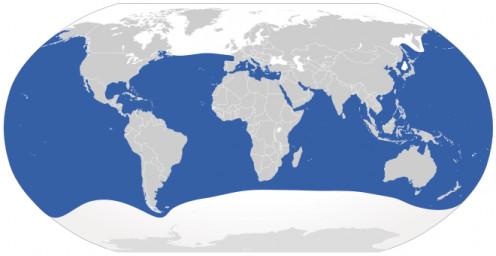 Great White Shark global range