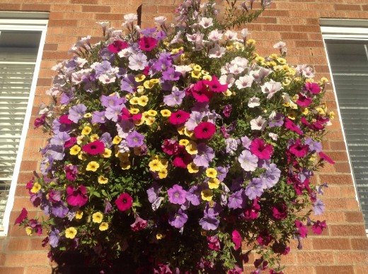 One of the beautiful flower baskets outside of the Wort Hotel.