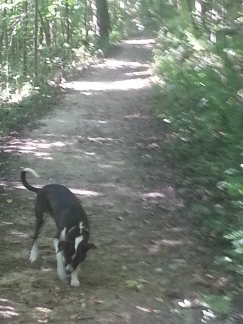 Whether you go for a hike in the woods or just take a walk around the block, your dog will need exercise every day.