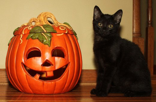 Black cats are associated with Halloween because superstitious people believe that they are a witch's familiar.