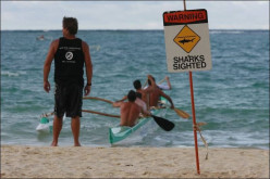 Tips to Prevent a Shark Attack