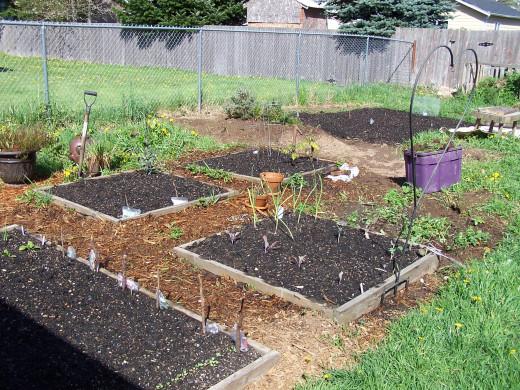 A healthy garden