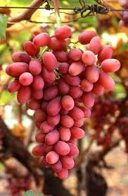Grapes Help Digestion