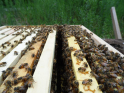 Beekeeping: Top 10 Questions Answered