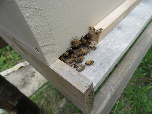 Honey bee hive entrance.