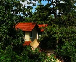 Photo Jungle Lodge