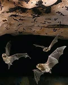 Bats and more bats