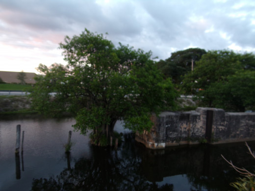 This old bridge cut off from the mainland is a perfect oasis for nesting birds