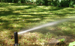 Make sure your irrigation system is in good working order. Fix all leaks and water rarely but deeply.