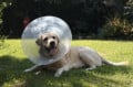 How to Care for a Dog After Neutering Surgery