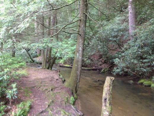 Rock Creek - Great Trout Fishing!