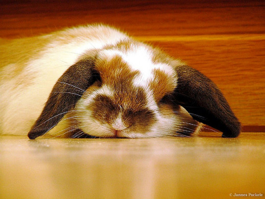 When I am tired, I feel like I want to slump over like this bunny.